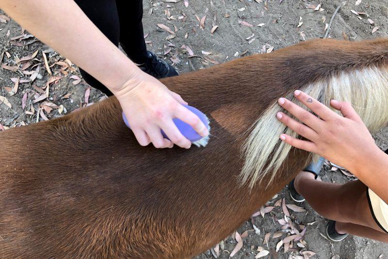 Equine Therapy at Camino a Casa