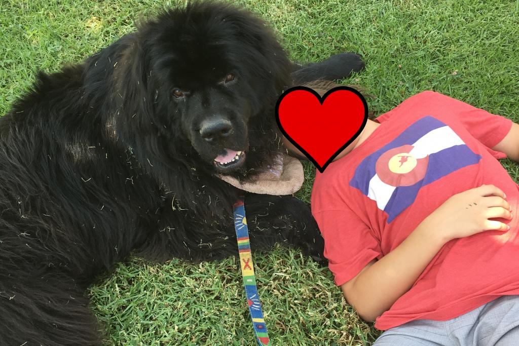 Otis therapy dog